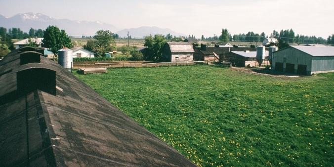 The Farm resized